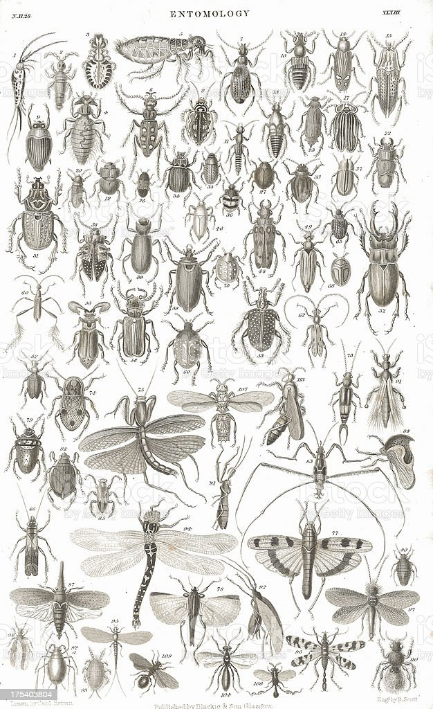 Insects old litho print from 1852 vector art illustration