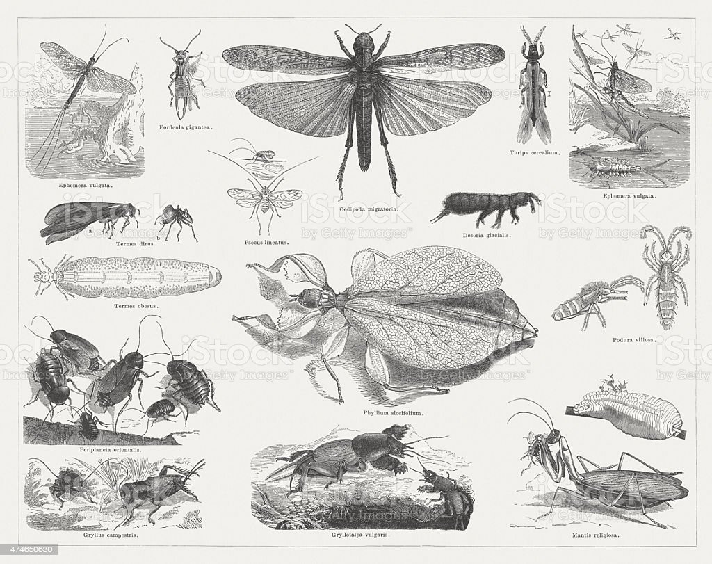 Insects, published in 1876 vector art illustration