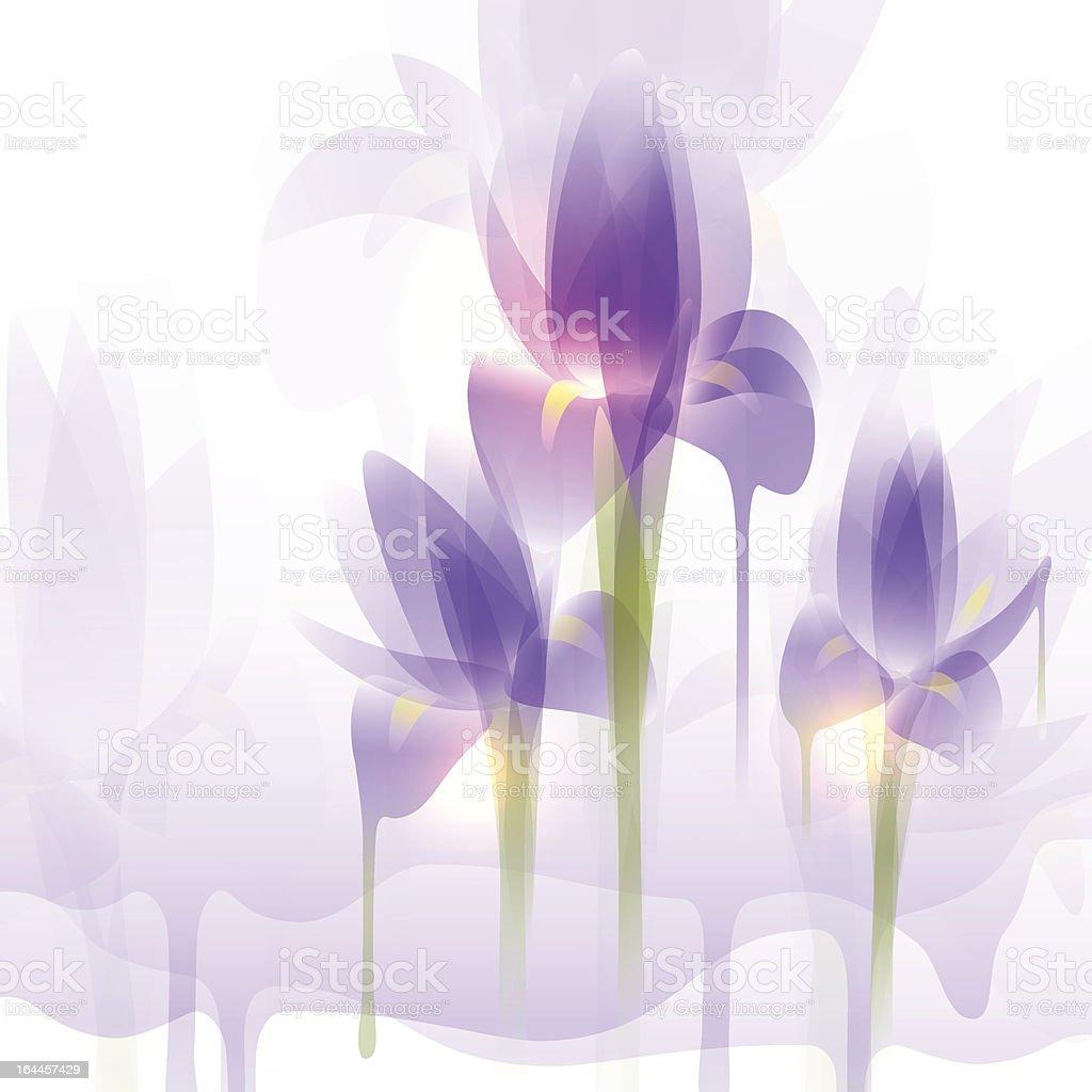 Irises vector art illustration