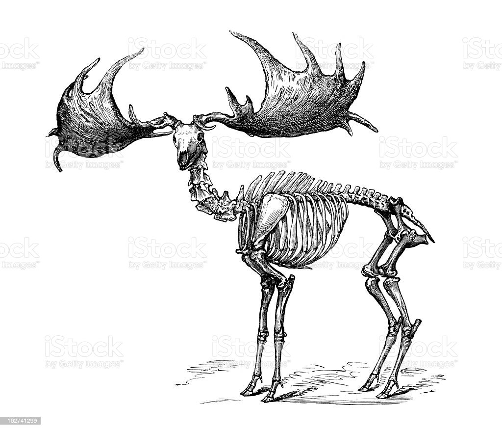 Irish Elk- Megaloceros giganteus vector art illustration