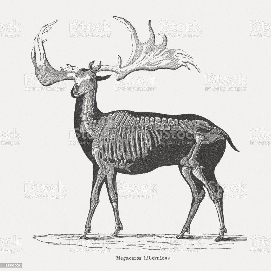 Irish elk (Megaloceros giganteus), wood engraving, published in 1875 vector art illustration