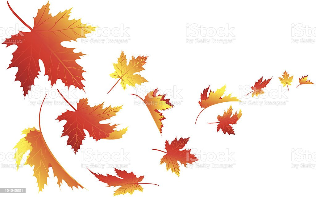 Isolate fall leaves vector art illustration