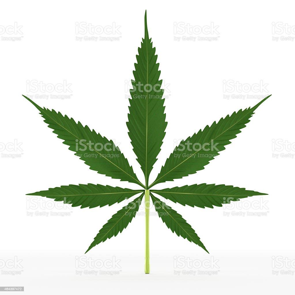 Isolated cannabis leaf vector art illustration