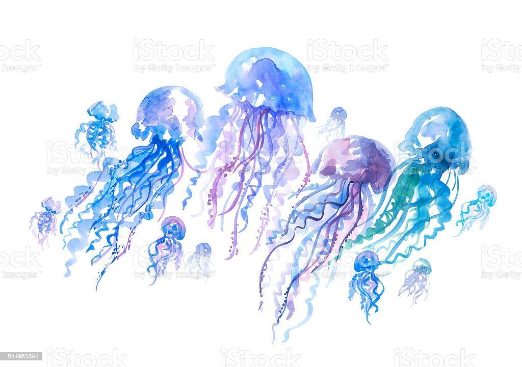 isolated jellyfish groop watercolor illustration. vector art illustration