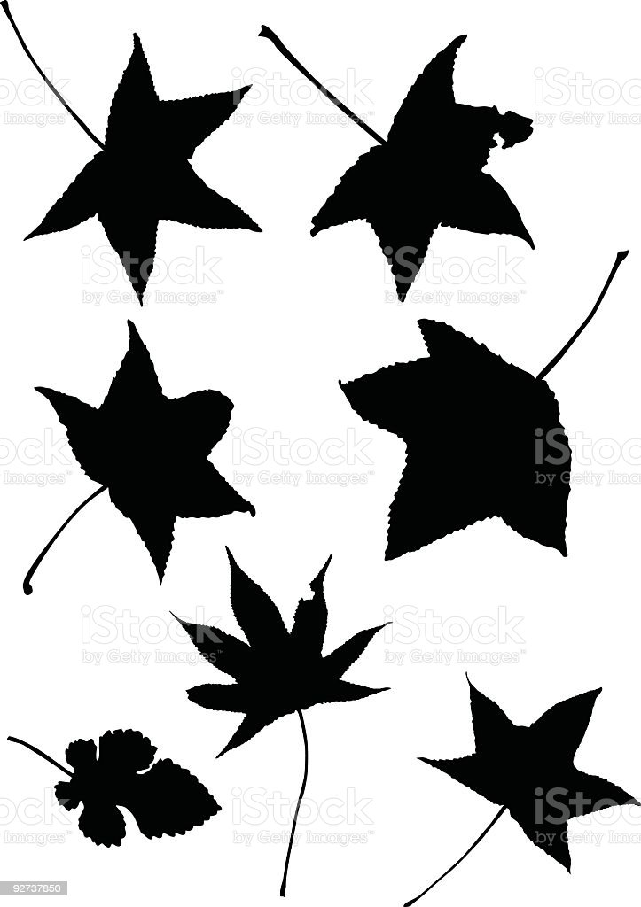Isolated leaves to use in your design royalty-free stock vector art