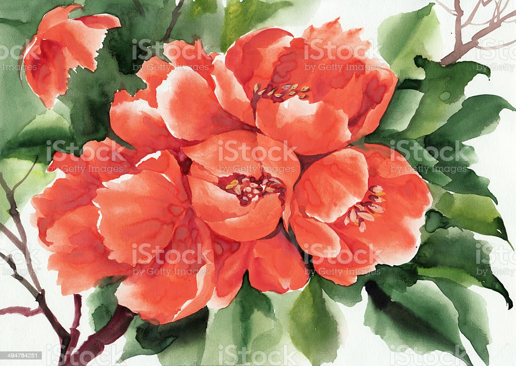 Japanese quince vector art illustration