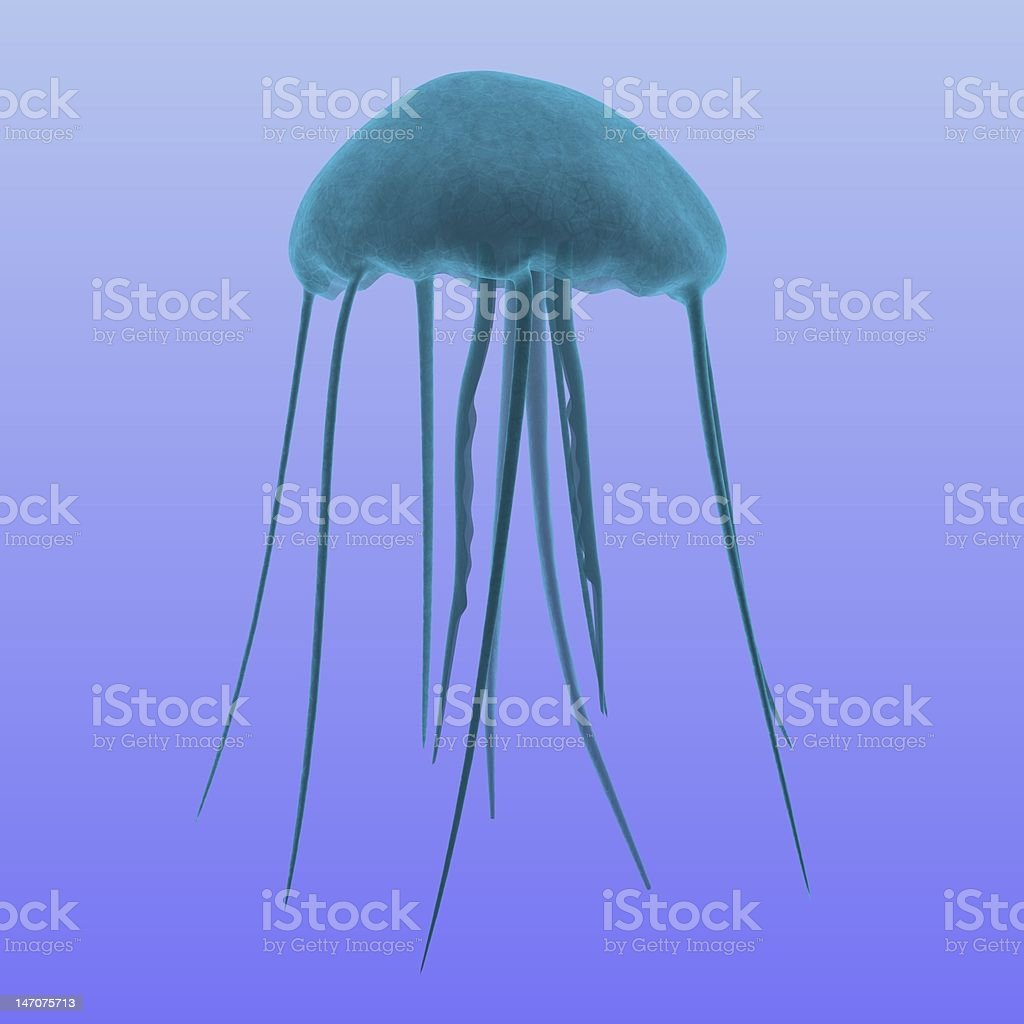 jellyfish royalty-free stock vector art