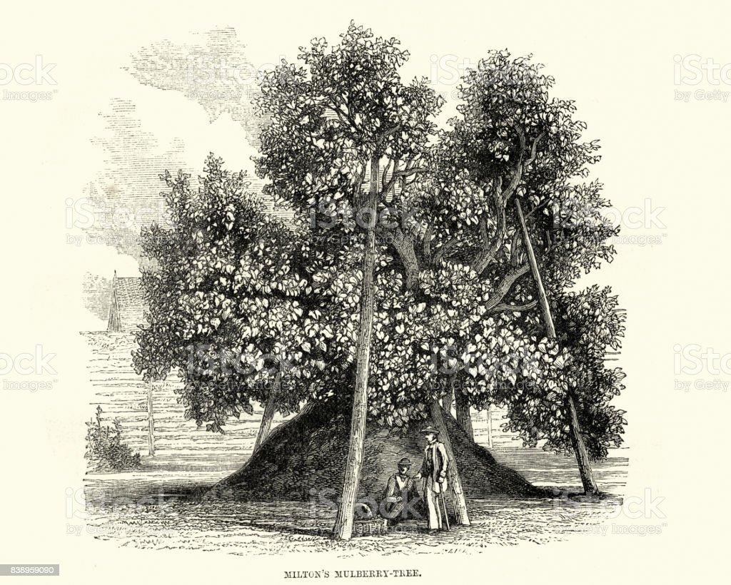 John Milton mulberry tree vector art illustration