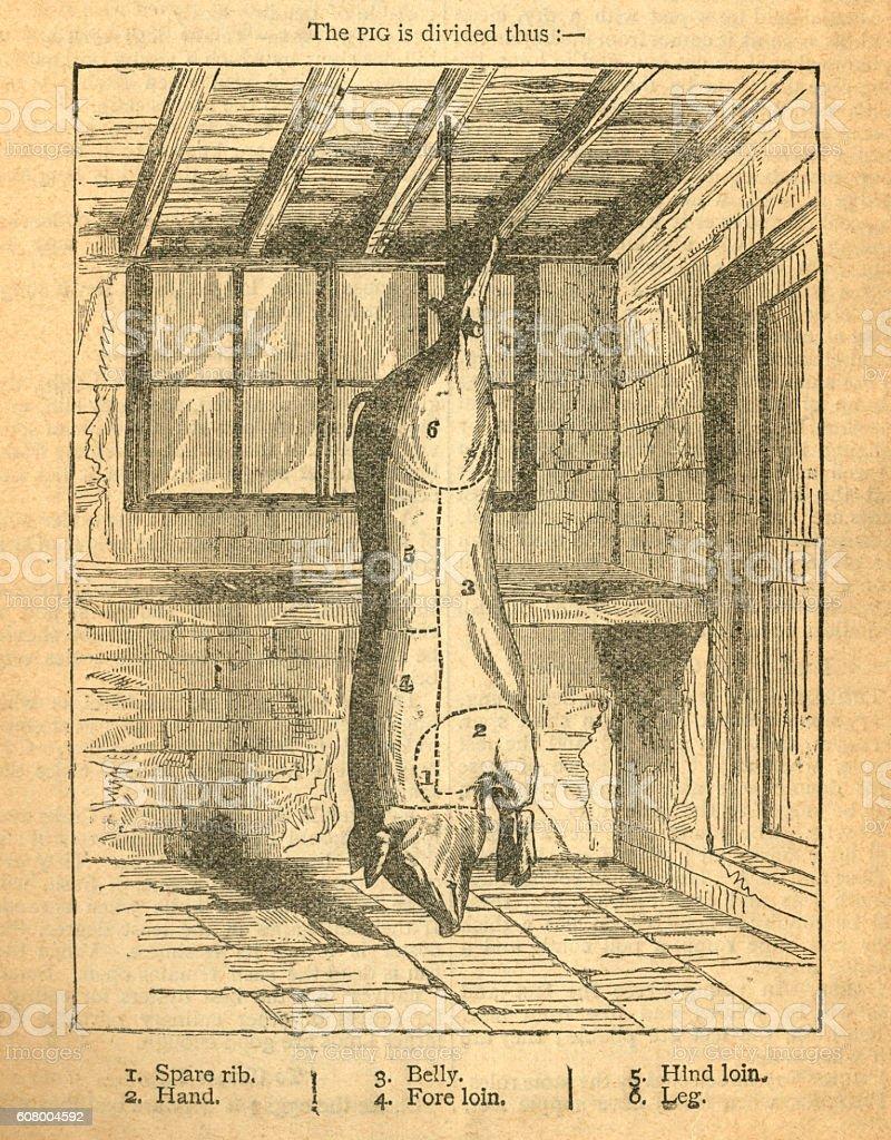 Jointing a pig - Victorian diagram vector art illustration