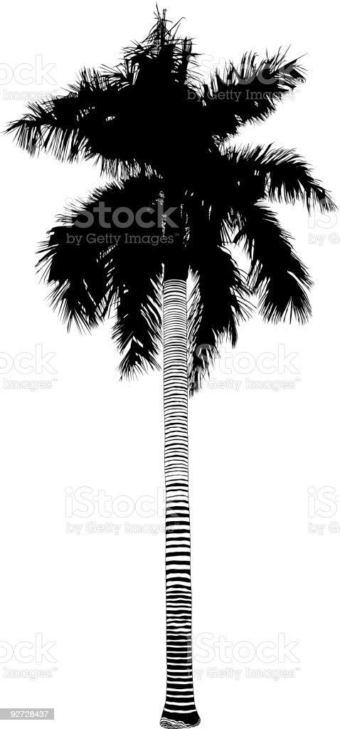 Jungle Palm Tree (Vector) royalty-free stock vector art