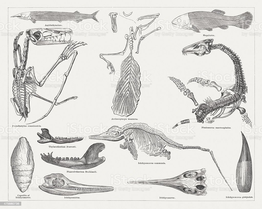 Jurassic fossils, wood engravings, published in 1876 vector art illustration