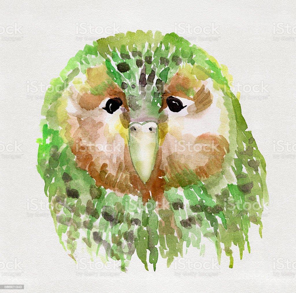Kakapo watercolor vector art illustration