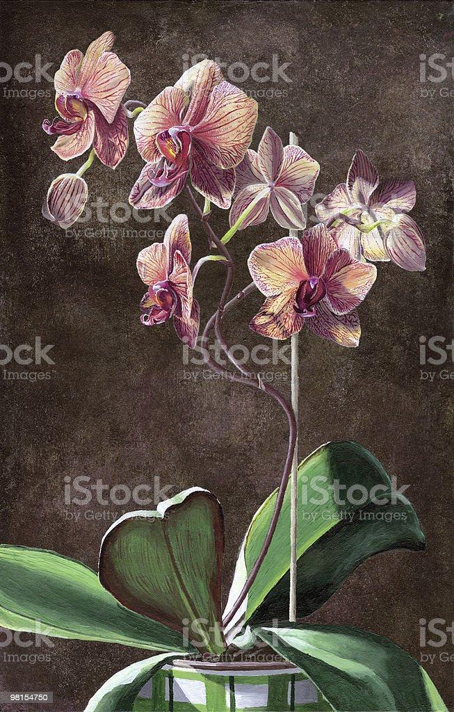 Kaleidoscope Phalaenopsis Orchid Painting royalty-free stock vector art