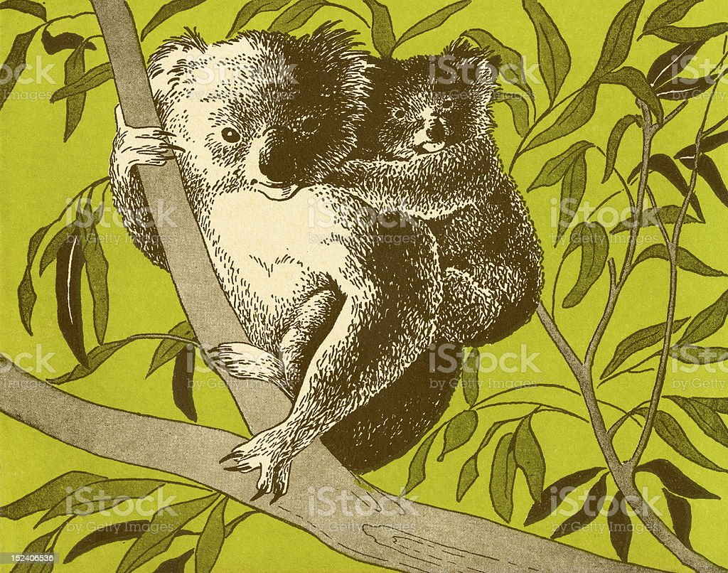 Koala Bears in Tree royalty-free stock vector art