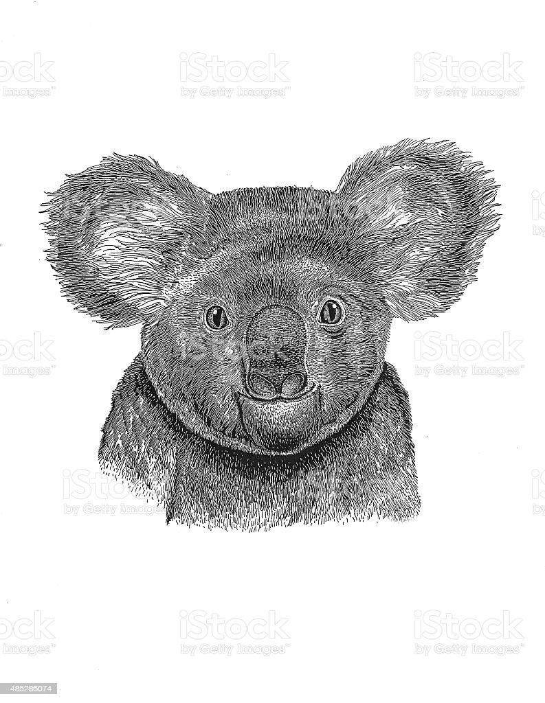 Koala (Abbildung Lizenzfreies vektor illustration
