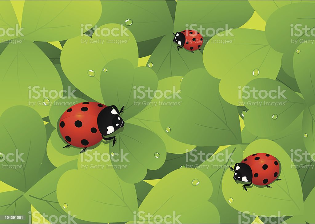 Ladybird on leaf royalty-free stock vector art