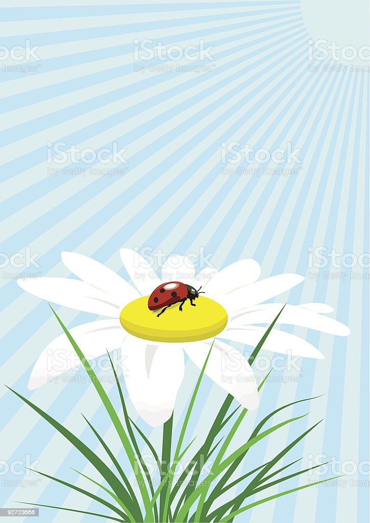 Ladybug on camomile vector art illustration