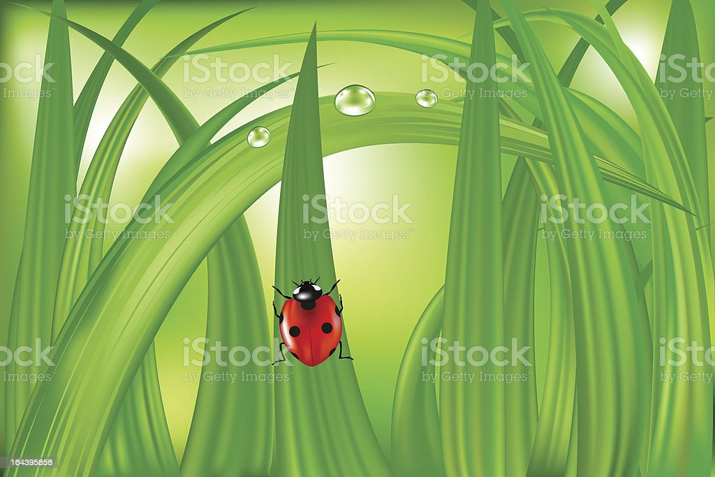 Ladybug On Green Grass royalty-free stock vector art