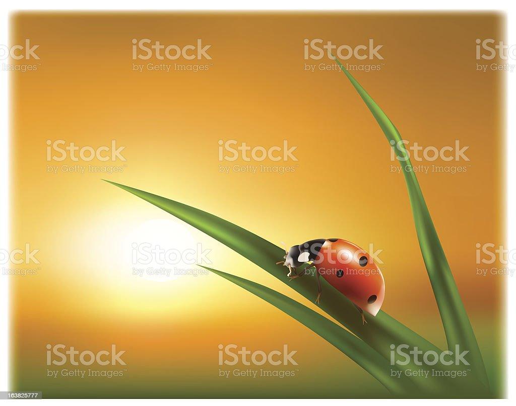 Ladybug on the green leaf royalty-free stock vector art
