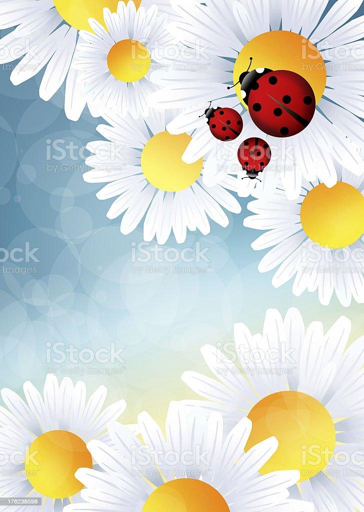 ladybugs on flowers royalty-free stock vector art