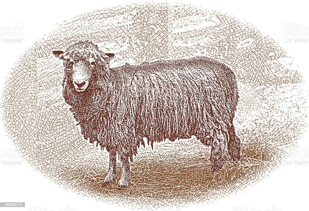 Lamb Design Element royalty-free stock vector art