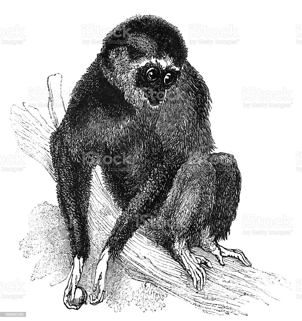 Lar gibbon vector art illustration
