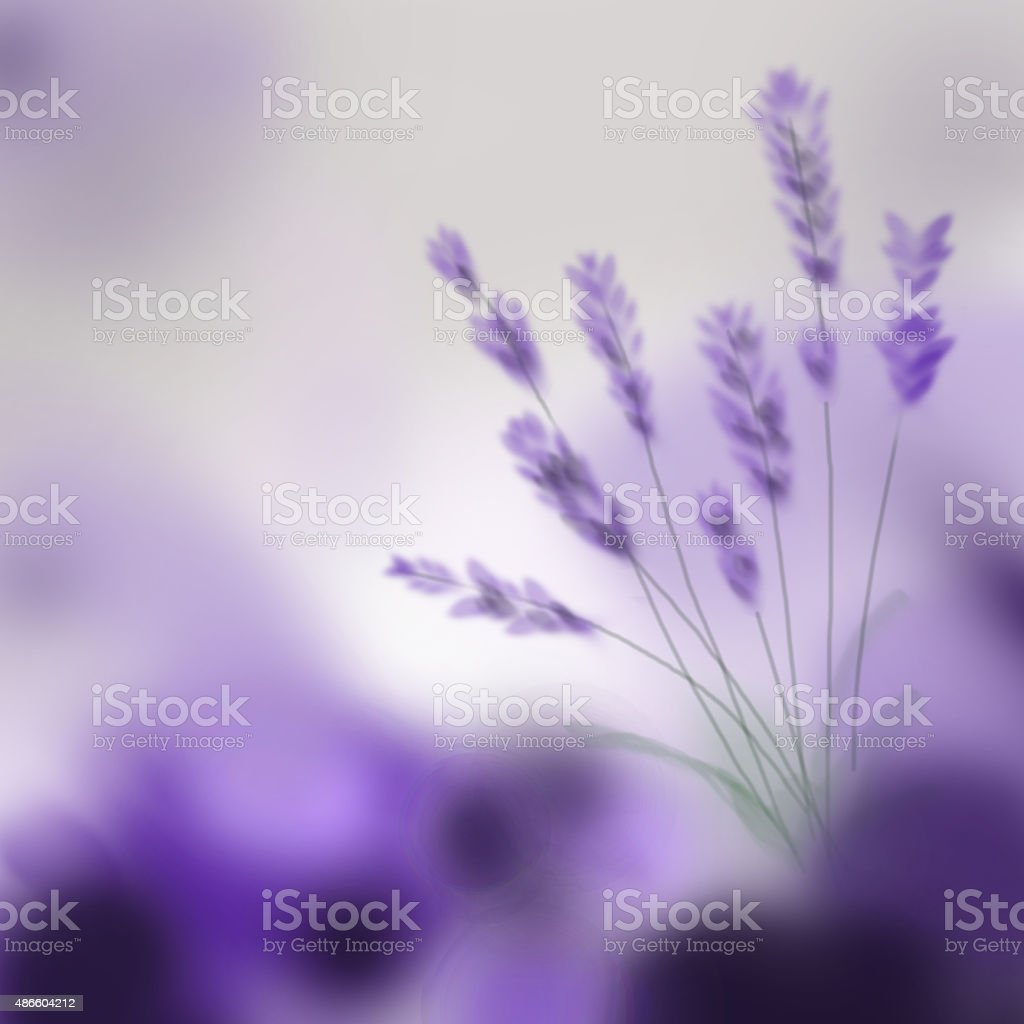 Lavender bouquet on purple background. Digital hand painting vector art illustration