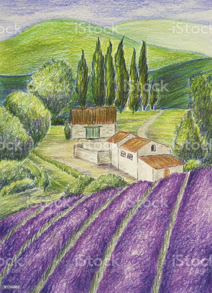 Lavender Field and Landscape - Drawing vector art illustration