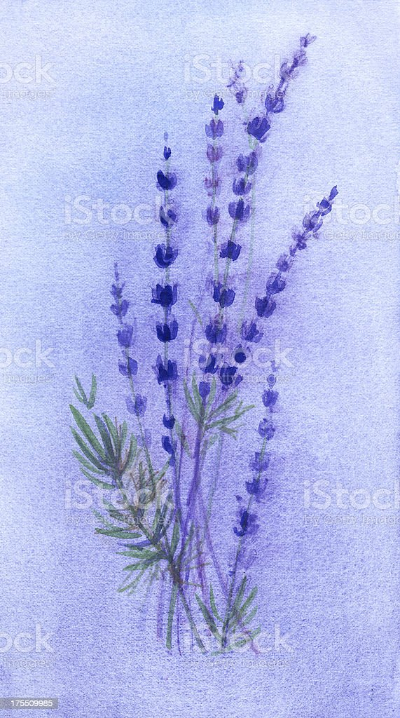 Lavender Flowers Background Watercolor Painting royalty-free stock vector art