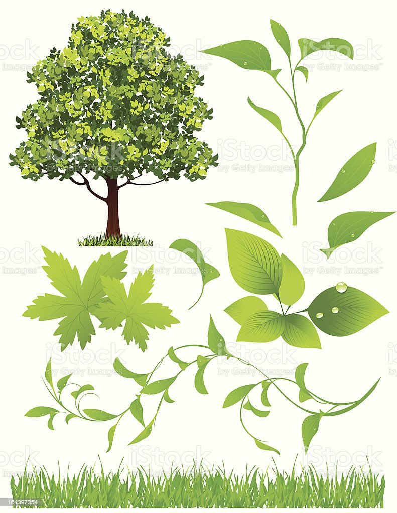 Leaf collection royalty-free stock vector art