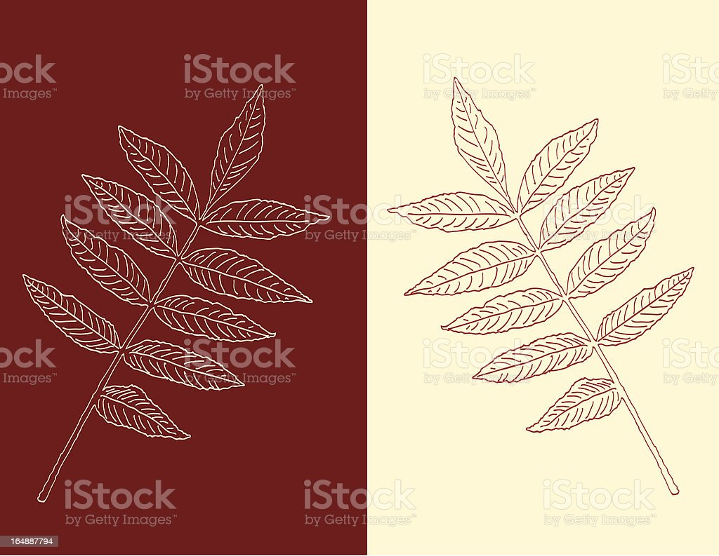 Leaf Silhouette in Reflection (vector) vector art illustration