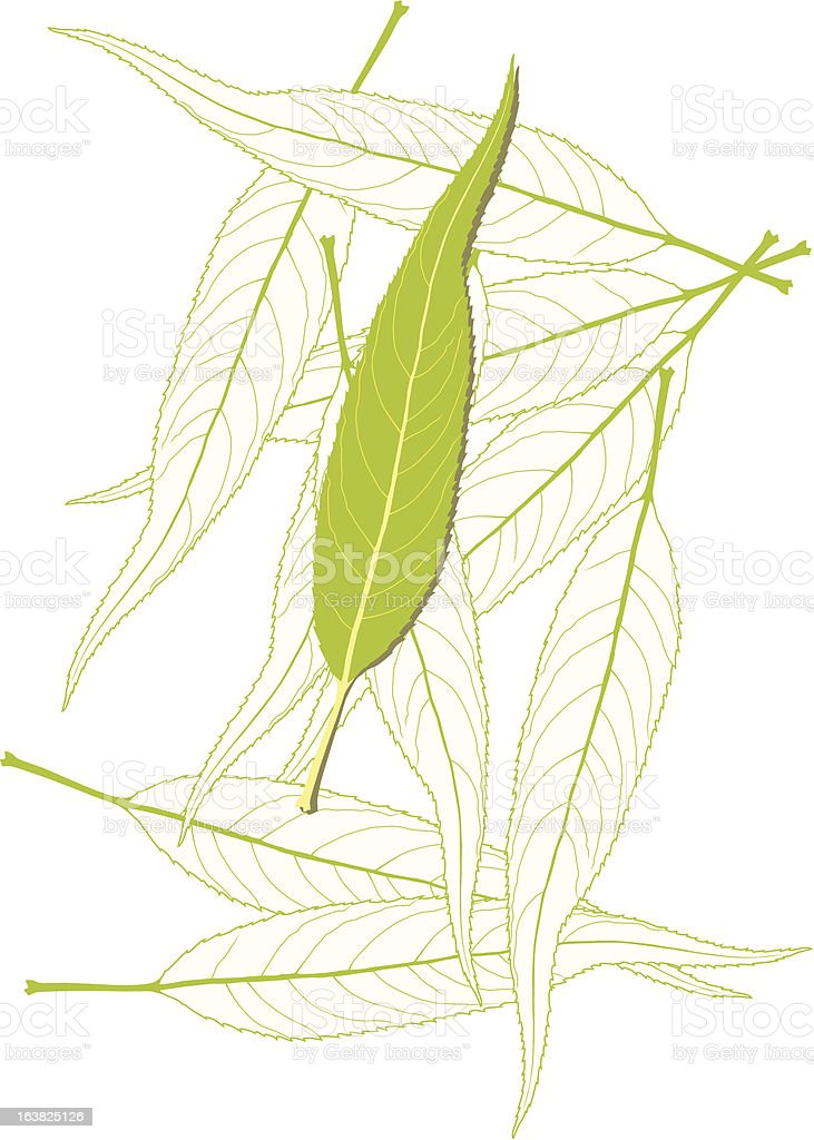 leaf3 royalty-free stock vector art