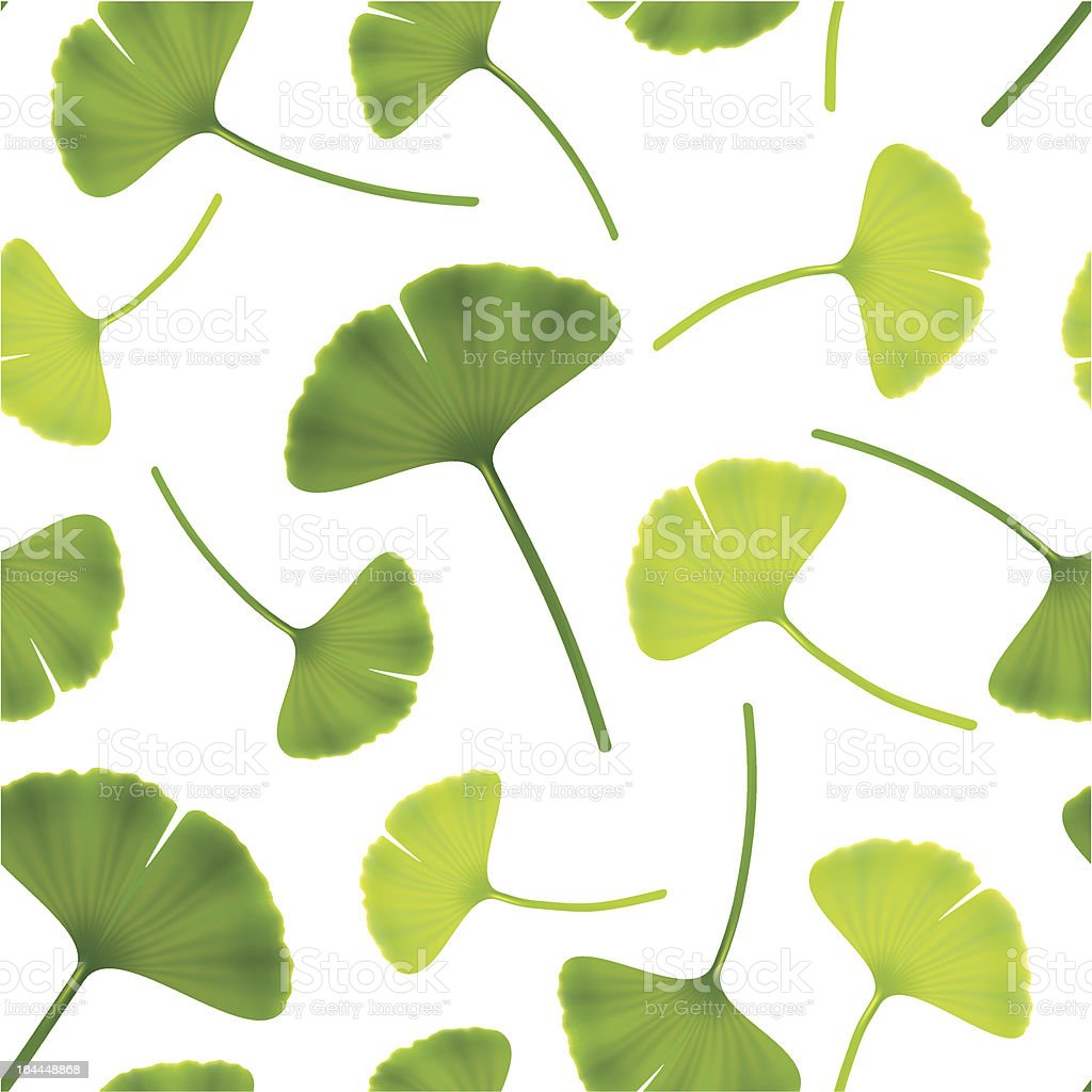 Leaves of ginkgo bilboa. vector art illustration