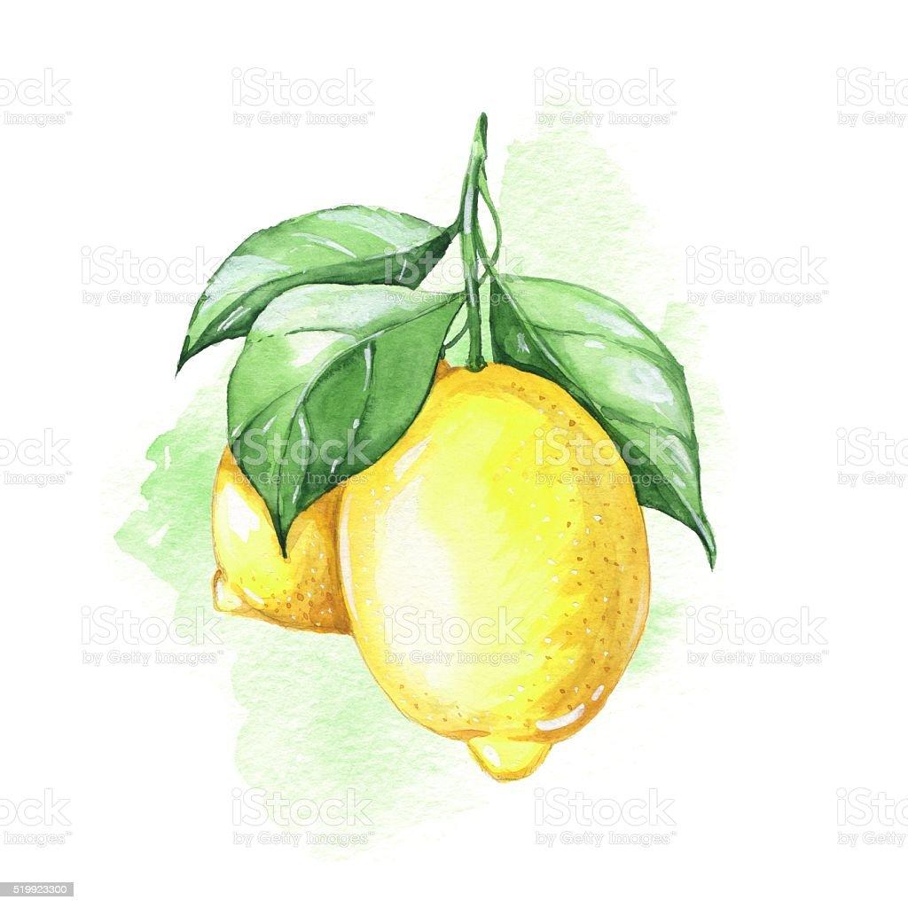 Lemons. Watercolor illustration. vector art illustration