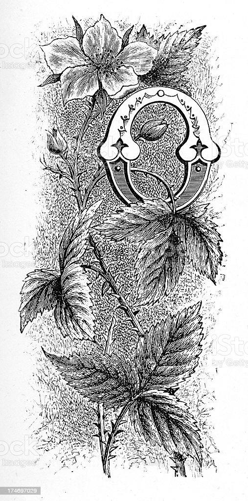 Letter O - Flower Font royalty-free stock vector art