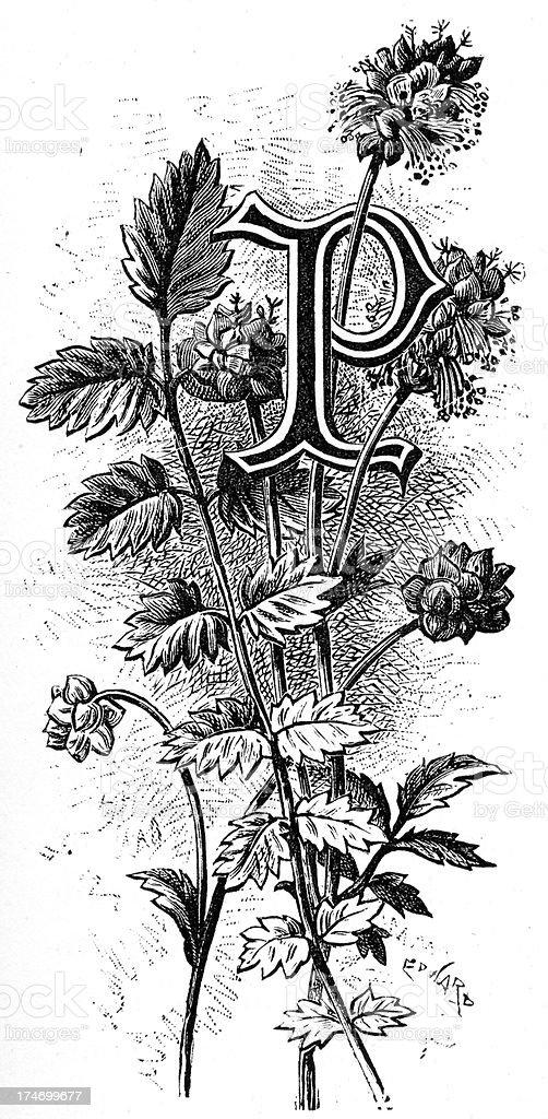 Letter P - Flower Font royalty-free stock vector art