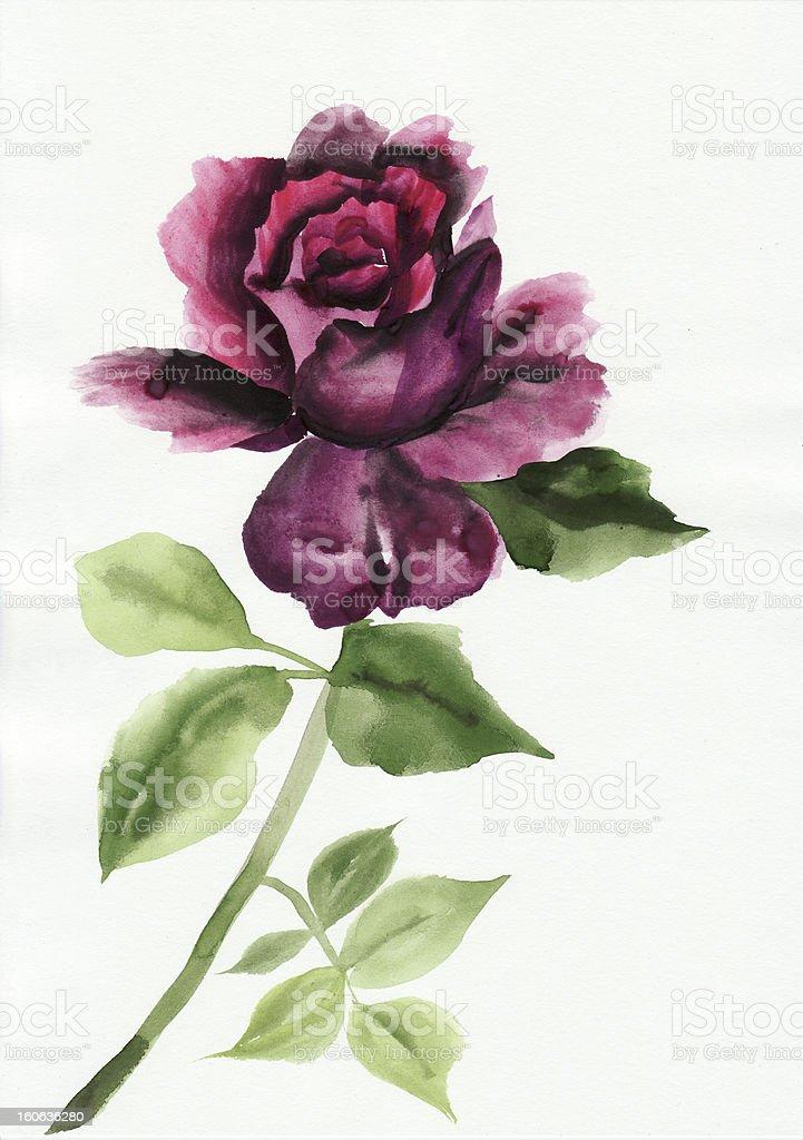 Lilac rose royalty-free stock vector art