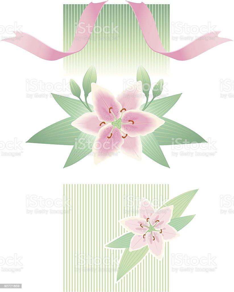lily vignette vector art illustration