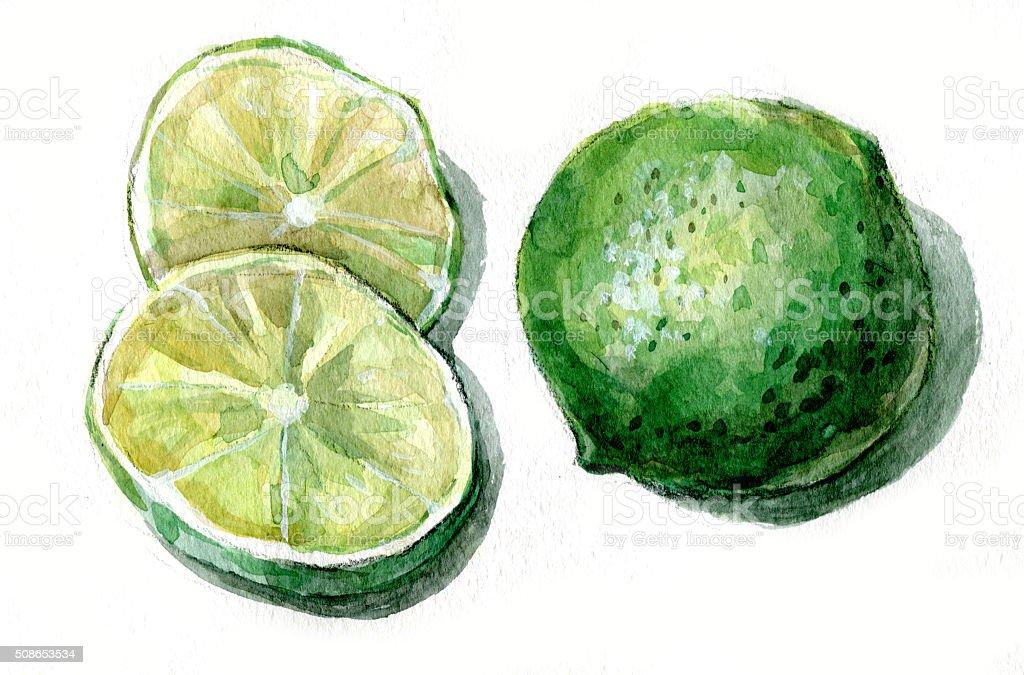 lime fruit vector art illustration