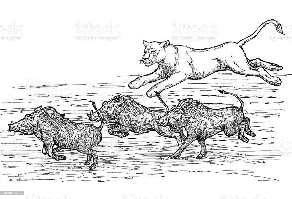 Löwin offensiver Wart Hogs Lizenzfreies vektor illustration