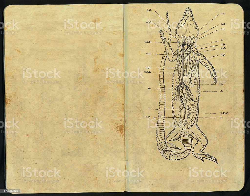 Lizard anatomy Sketch Pad vector art illustration