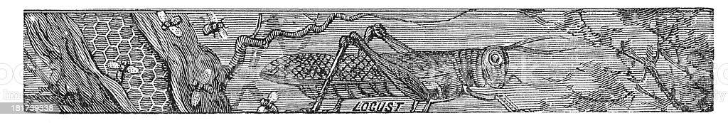 Locusts and Honey Engraving 19th Century vector art illustration