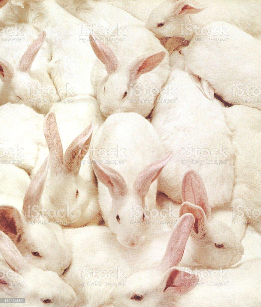 Lots of Bunnies! royalty-free stock vector art