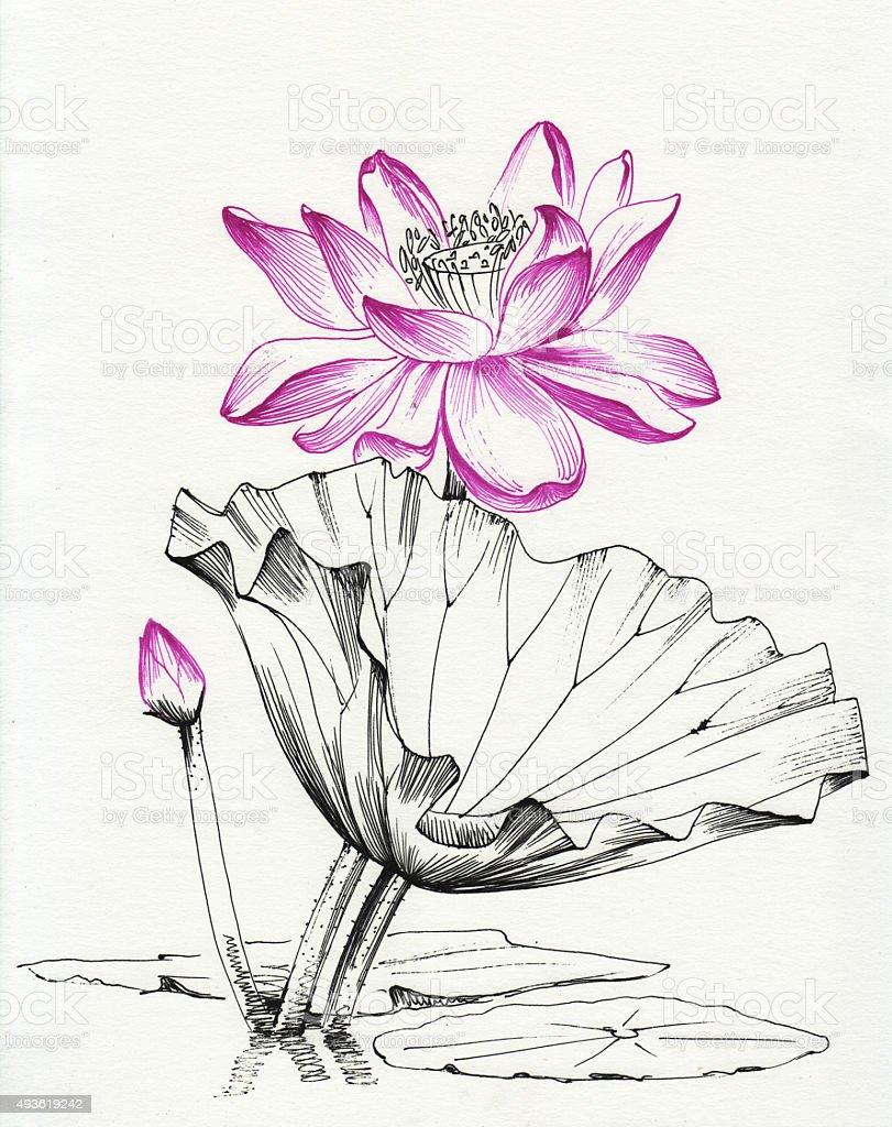 Lotus flower line art vector art illustration