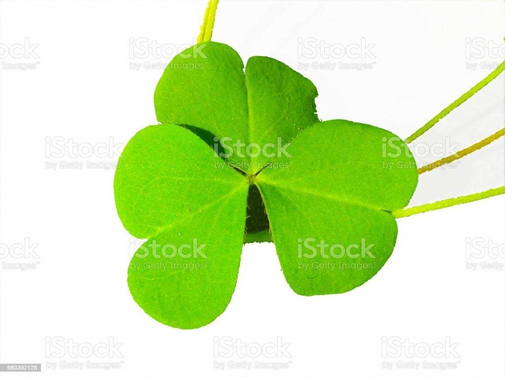 Lucky symbol clover shamrock vector art illustration