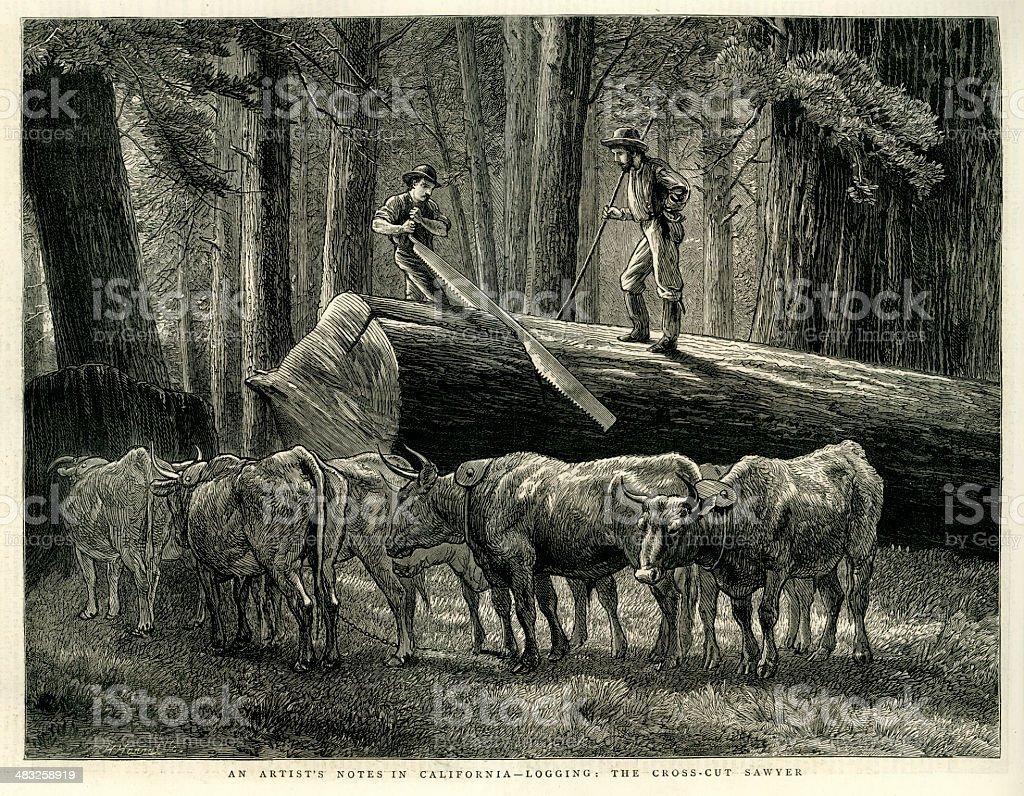 Lumberjacks - California vector art illustration
