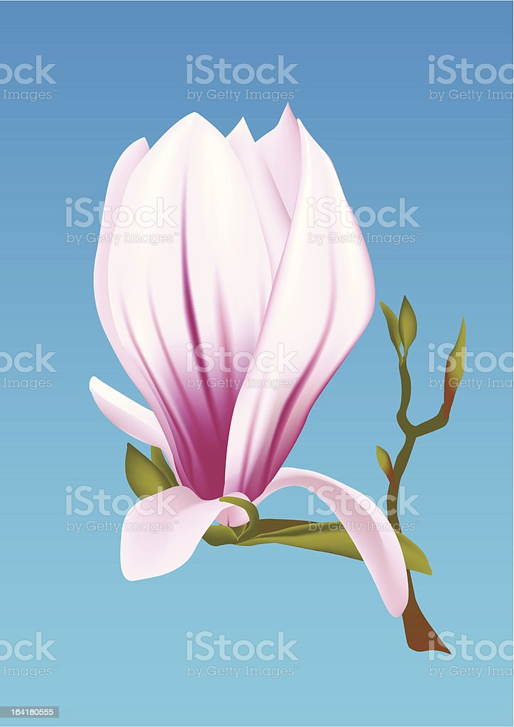 Magnolia flower royalty-free stock vector art