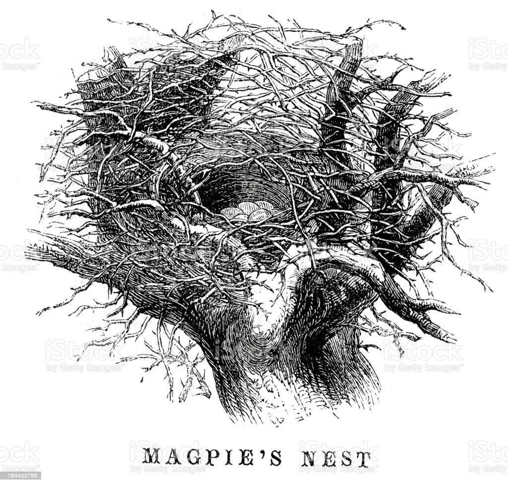 Magpie's nest royalty-free stock vector art