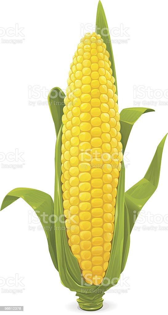 Maize vector art illustration