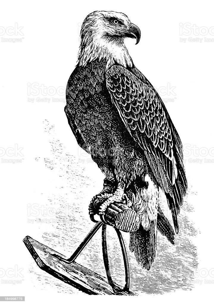 Majestic Eagle - Victorian Engraving vector art illustration